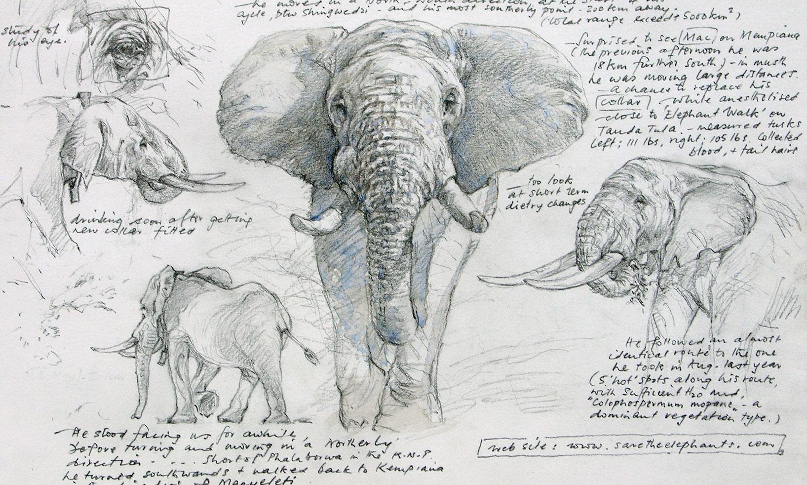 Save The Elaphants