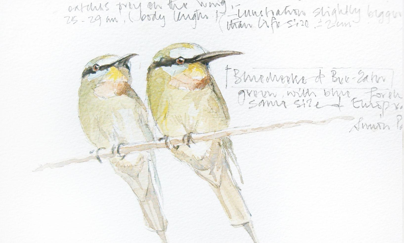 Blue Cheek Bee Eaters